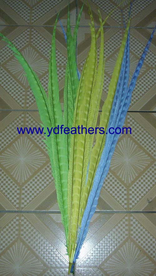 dyed bleached lady amherst side tail feather