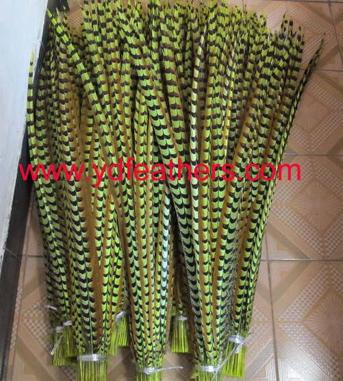 dyed green Reeves pheasant tail feathers
