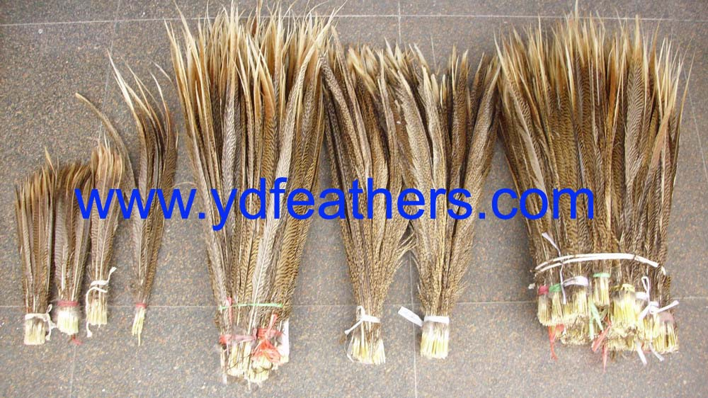 Golden pheasant tail feathers
