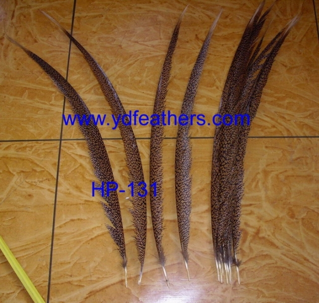 golden pheasant ceter tail feather